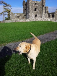 09. Bective Abbey, Co. Meath